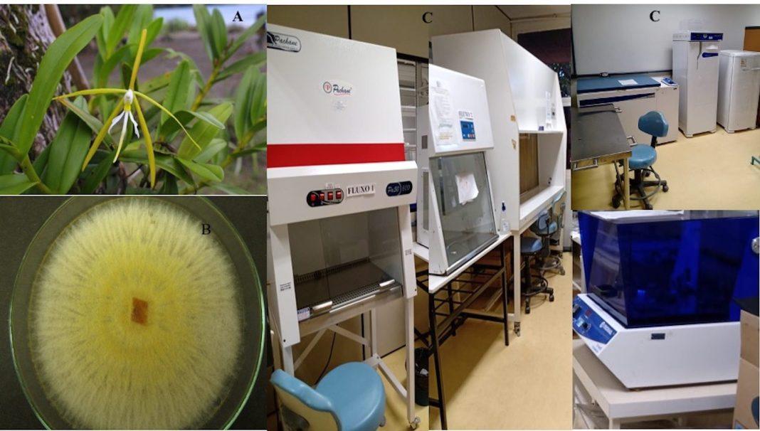 Laboratório da UFG que descobriu fungos que ajudam no cultivo do arroz, feijão, soja e Cana de acúcar