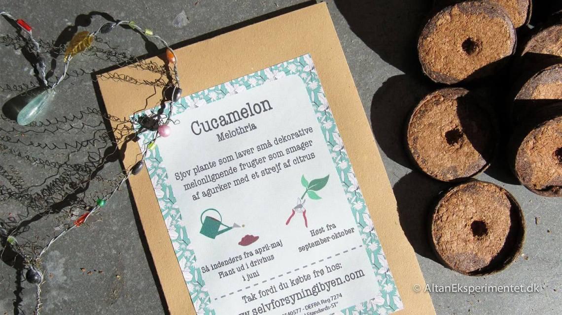 Cucamelon frø. Cucameloner bliver også kaldt jungleagurker. De får de mest bedårende små frugter.