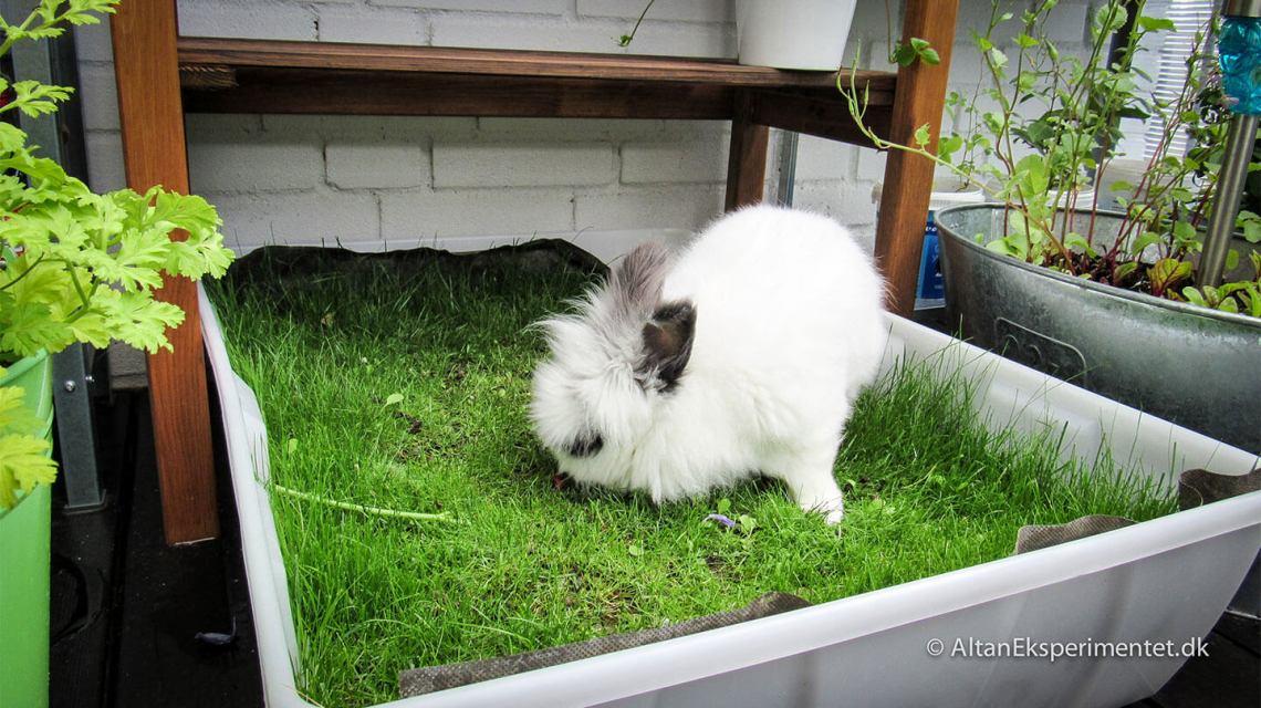 Kanin på altanen