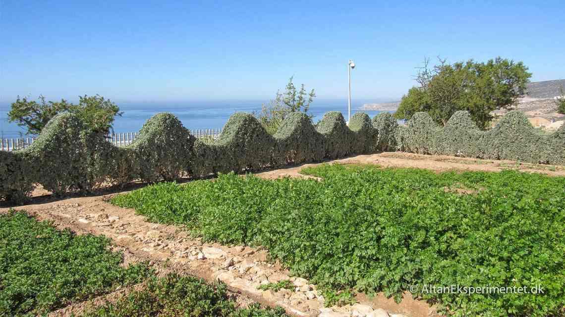 Marokkansk køkkenhave udsigt til Atlanterhavet