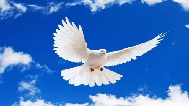 الإسلام .. دين السلم والسلام