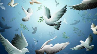 الاسلام يعلم البشرية ثقافة السلام