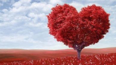 Photo of الحب في الإسلام