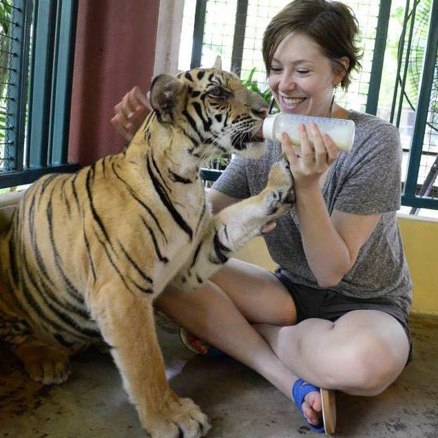 Dr Anna Marie - Tiger