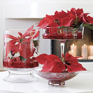 red-poinsettias-l