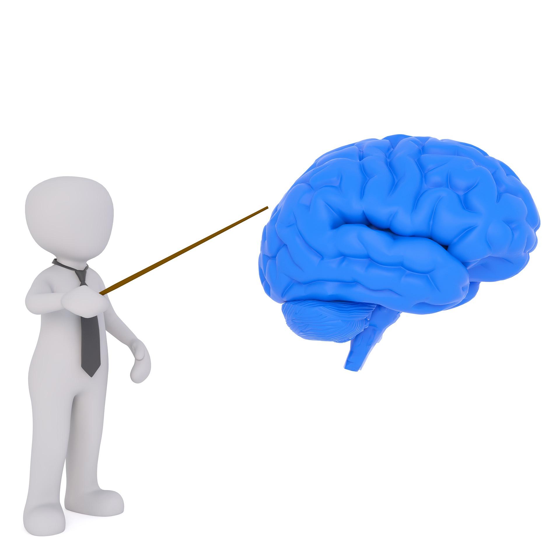 Eine animierte Figur, die als Lehrer zu erknnen ist, deutet mit einem Zeigestock auf ein animiertes Gehirn.