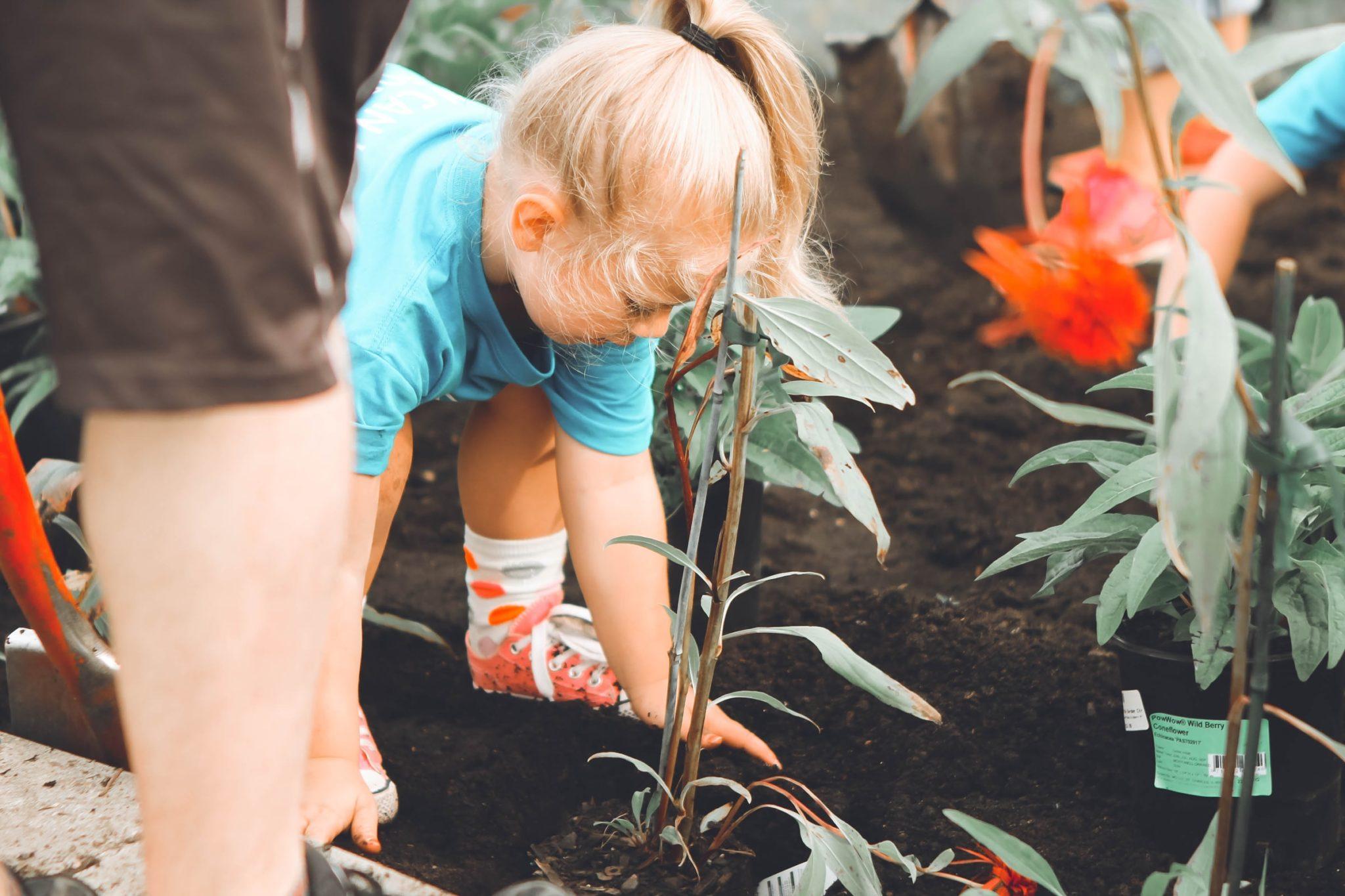 Ein Kind pflanzt
