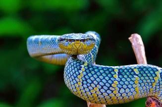 Blue & yellow snake