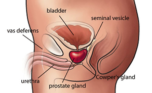 dolore alla prostata difficoltà minzione
