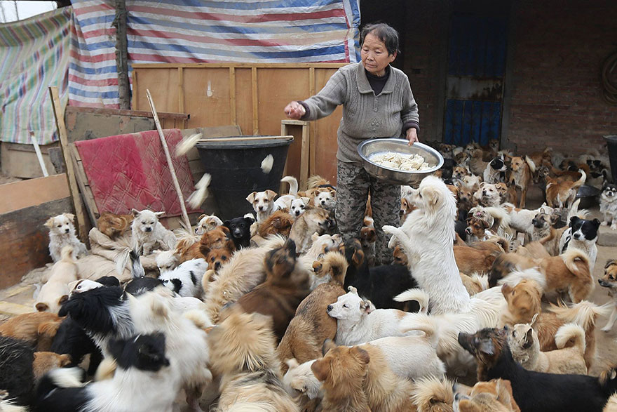 Every Day, These Elderly Chinese Women Wake Up At 4AM To Feed 1,300 Stray Dogs