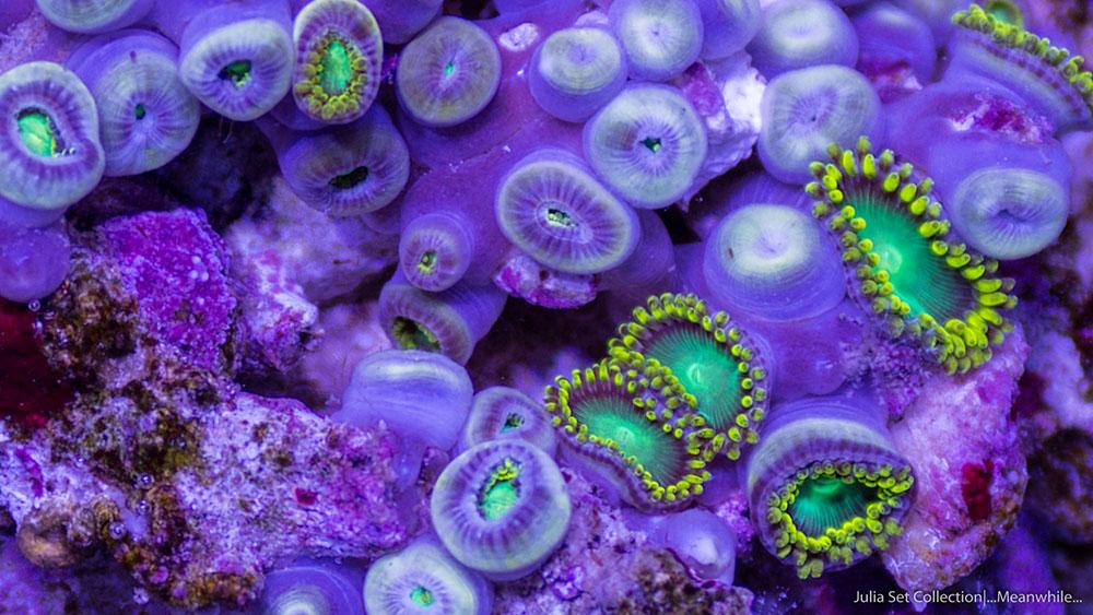An Extraordinary Macro Timelapse of Aquatic Wildlife by Sandro Bocci