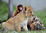 You'll Be Touched By The Unusual Animal Friendship Shown In These 10 Pictures
