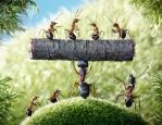 The total weight of all the ants on Earth is about the same as the weight of all the humans on Earth