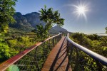 Canopy Walkway that Lets You Walk Above the Trees