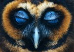 Majestic Owls Caught On Camera