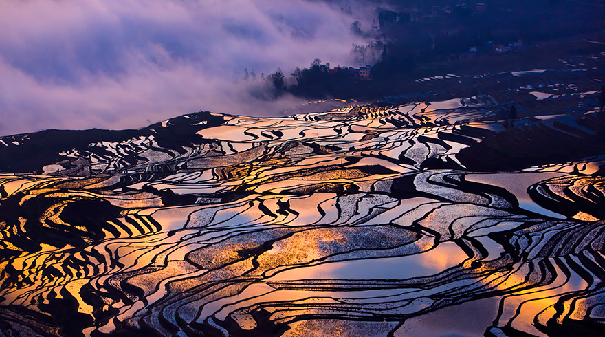 20 Awe-Inspiring Photographs of Rice Fields at Sunset