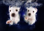 Fun Photoshoot with Puppies Underwater