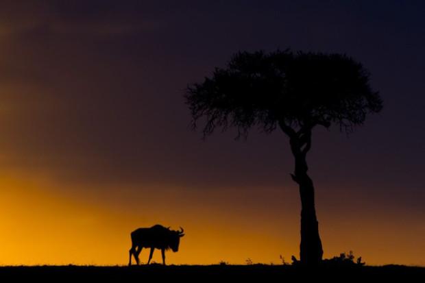 Sunsets On The Masai Mara