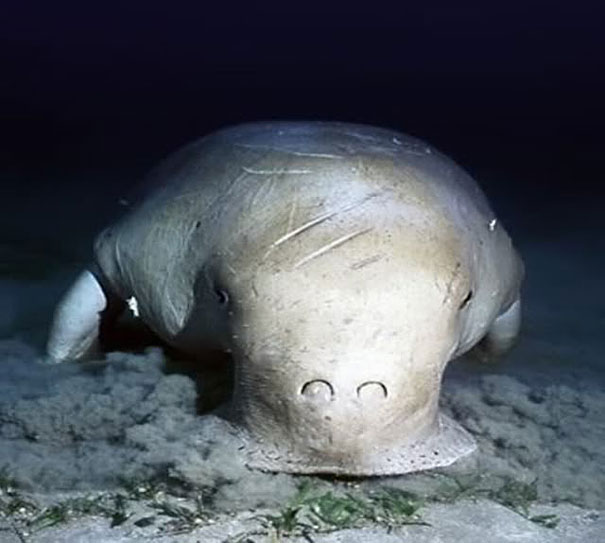 22 Strange Animals You Probably Didn't Know Exist - Dugong