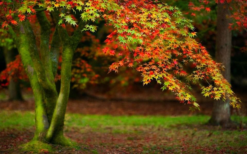 Beautiful Trees - Autumn Tree