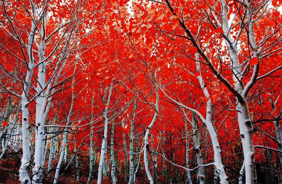 Beautiful Trees - California in Autumn