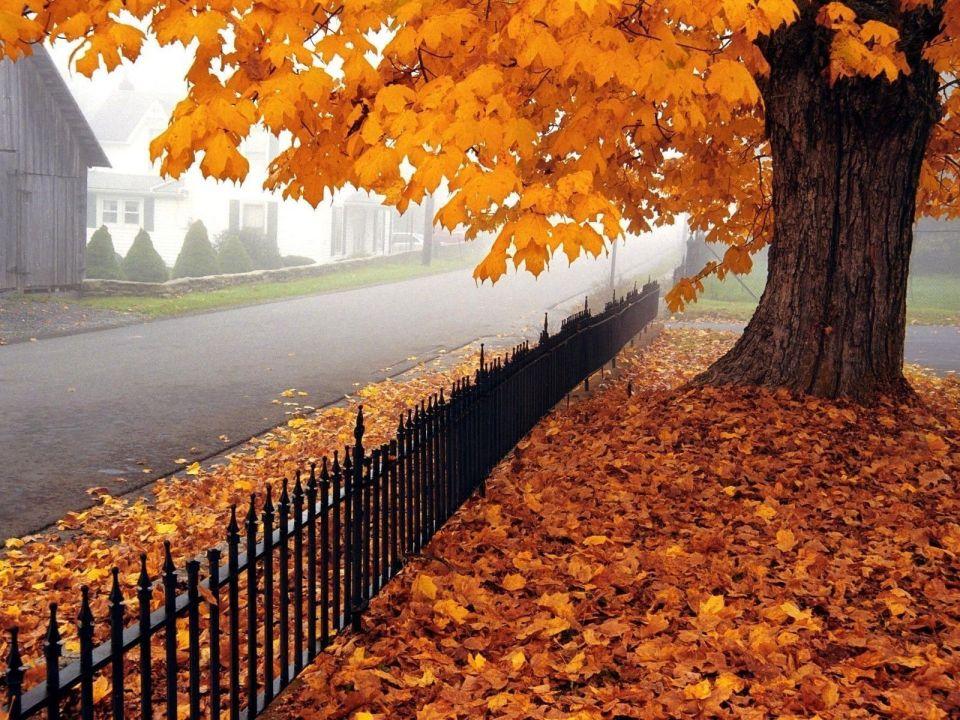 Beautiful Trees - Falling Maple Leaf