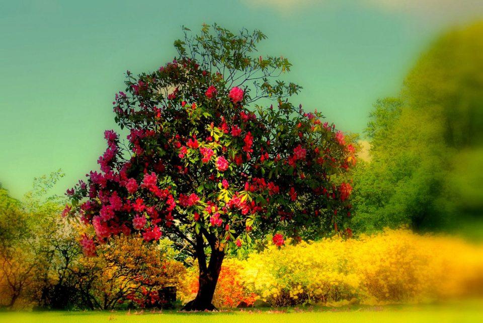 Beautiful Trees - Fields