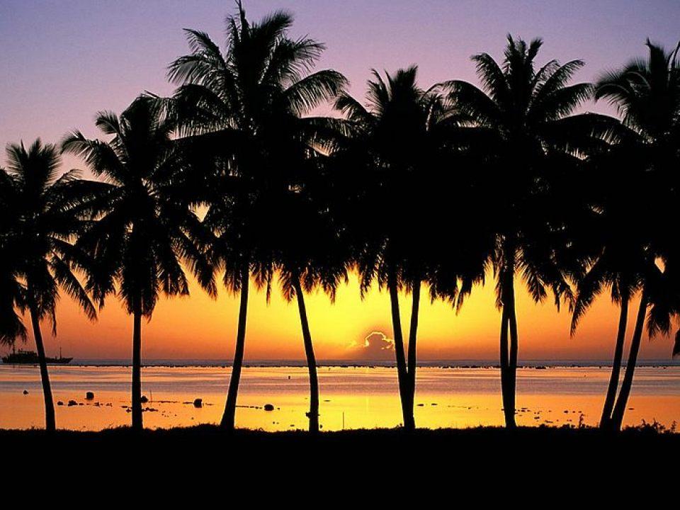 Beautiful Trees - Palm Sunset