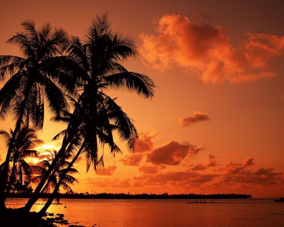 Beautiful Trees - Palms