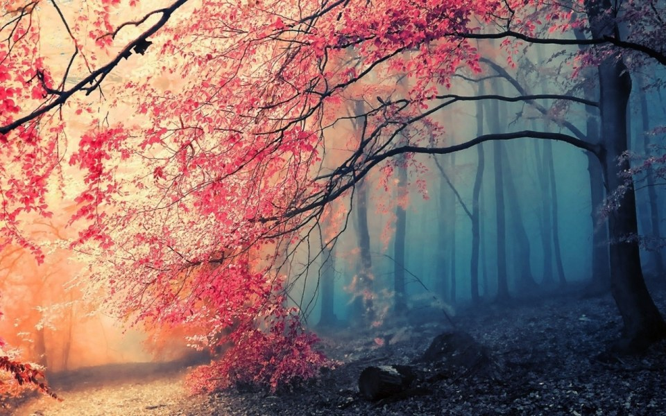 Beautiful Trees - Red Flower Tree Jungle Forest