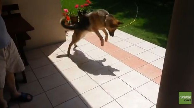 Dog Surpised by his Shadow