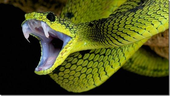 Mayan Spirit Animal - Snake