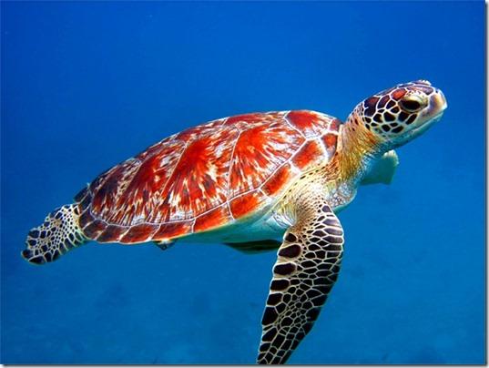 Mayan Spirit Animal - Turtle