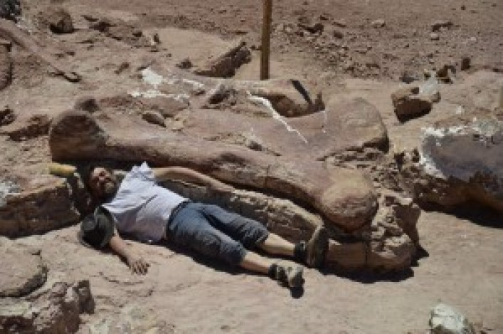 """Handout picture released on May 17, 2014 by the Egidio Feruglio Paleontological Museum showing a technician next to a dinosaur fossile -- likely to be the largest ever to roam the earth-- in Chubut, some 1,300 kilometers (800 miles) south of Buenos Aires. Paleontologists in Argentina's remote Patagonia region have discovered fossils of a creature is believed to be a new species of Titanosaur, a long-necked, long-tailed sauropod that walked on four legs and lived some 95 million years ago in the Cretaceous Period.    AFP PHOTO / Museo Egidio Feruglio     RESTRICTED TO EDITORIAL USE - MANDATORY CREDIT """"AFP PHOTO / Museo Egidio Feruglio"""" - NO MARKETING NO ADVERTISING CAMPAIGNS - DISTRIBUTED AS A SERVICE TO CLIENTS"""