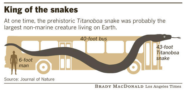 titanoboa comparison