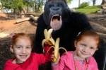 41 Incredibly Hilarious Animal Photobombs