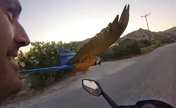 Man Races His Macaw And Everyone Wins