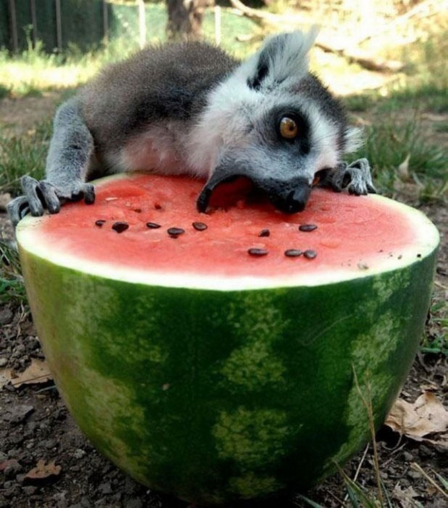Photos Of Animals Eating That'll Make You Smile - 9