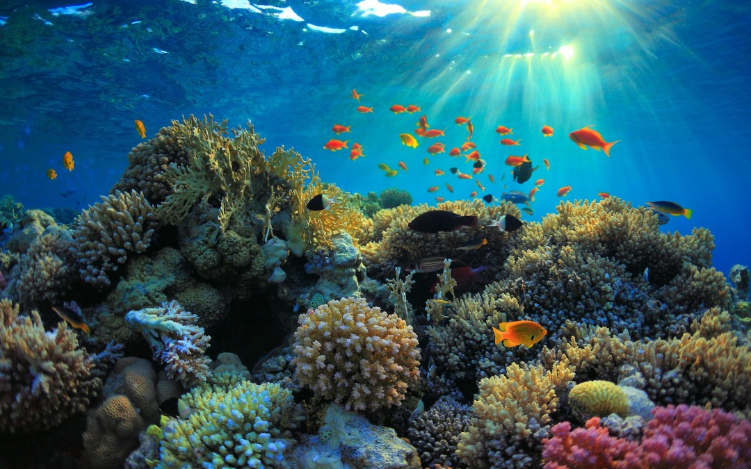 The Colorful Sights Under the Bali Waves