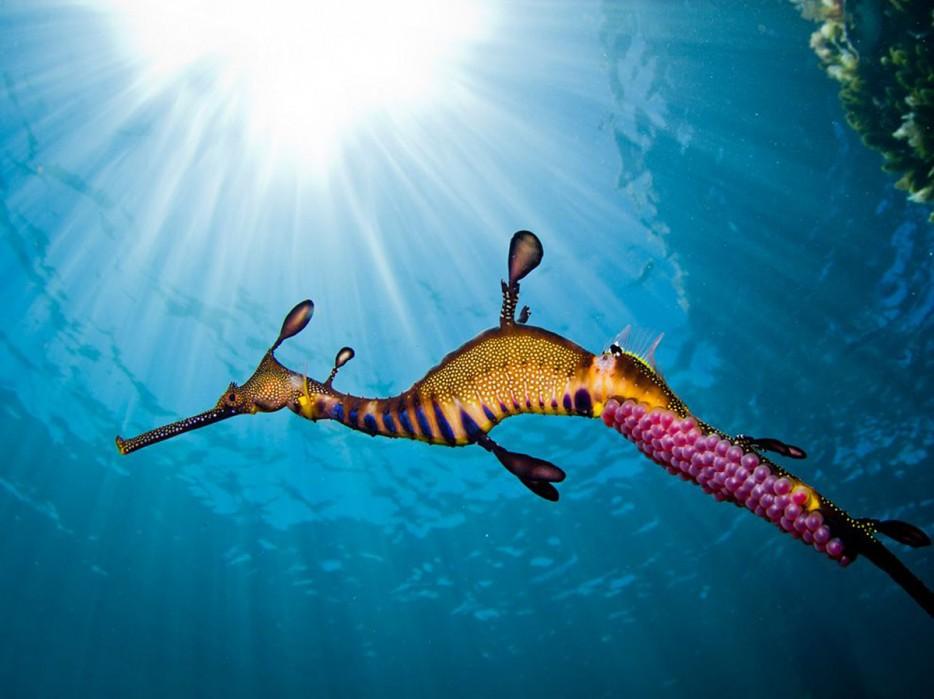 beatiful colour sea horse
