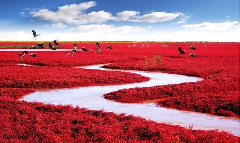 Red Beach, located in Dawa County, Panjin