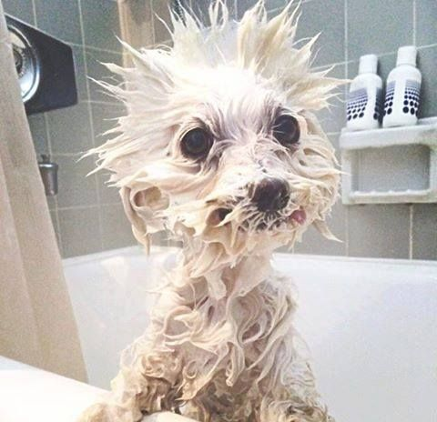 Funny Dogs Just Dont Want To Bath 2