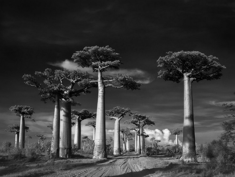10 Photos Of Some Of The World's Oldest Trees