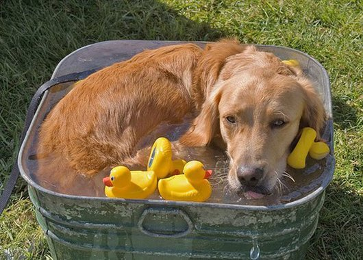 Funny Dogs Just Dont Want To Bath 1