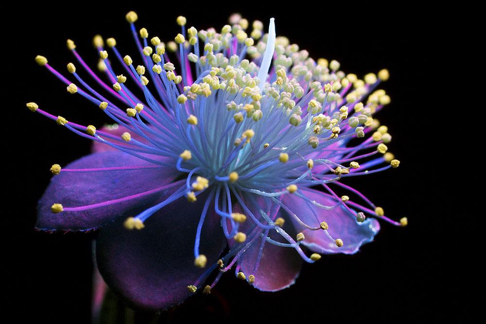 Glowing Flowers 1