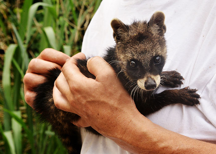 Rare Animal Babies You've Never Seen Before - 31. Baby Civet
