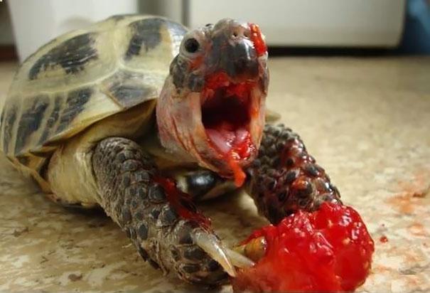 Animals Eating Berries