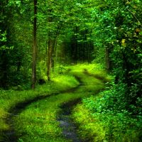 Green Forest Deep Path HD 3D Wallpaper