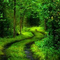 Green Forest Deep Path HD 3D Wallpaper