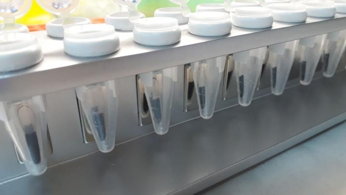 Producirán un kit de extracción rápida de ARN para el diagnóstico de Covid- 19 con Sello Bonaerense